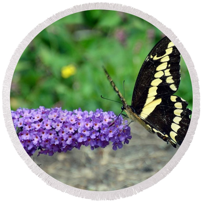 Gardening Round Beach Towel featuring the photograph Giant Swallowtail Three by Debra Bender