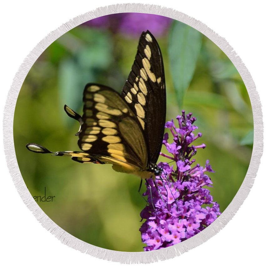 Gardening Round Beach Towel featuring the photograph Giant Swallowtail Two by Debra Bender