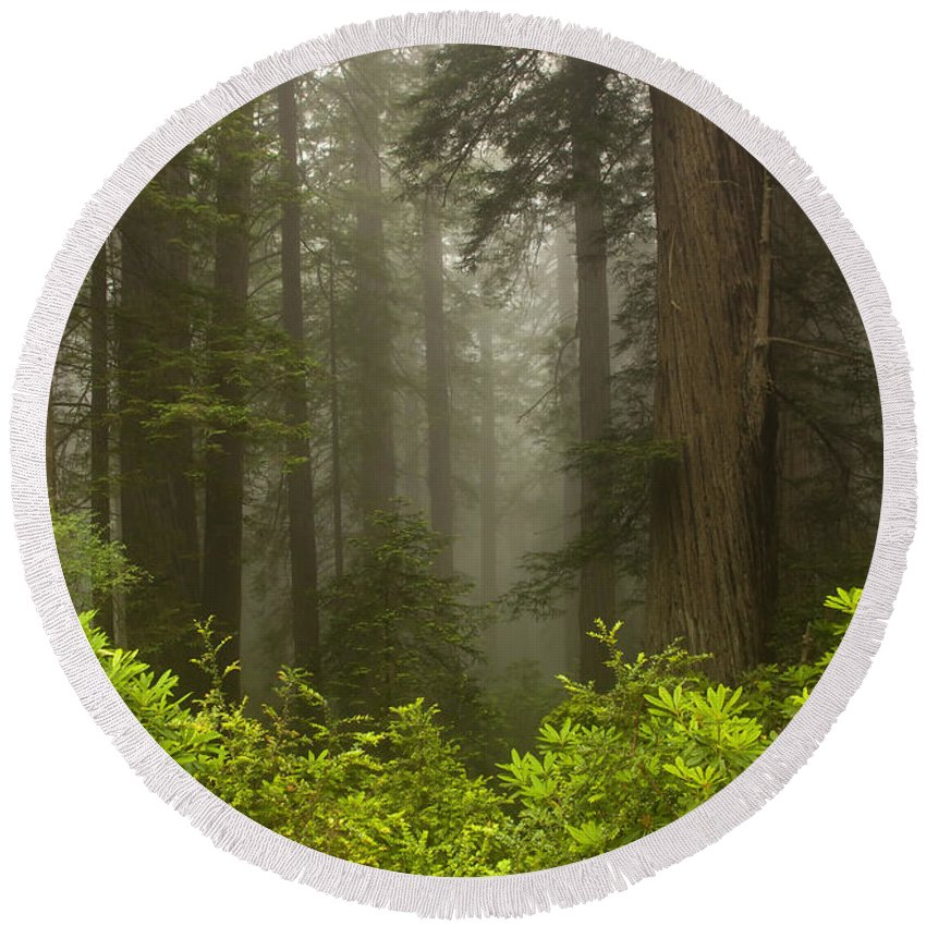 Redwood Round Beach Towel featuring the photograph Giants In The Mist by Mike Dawson