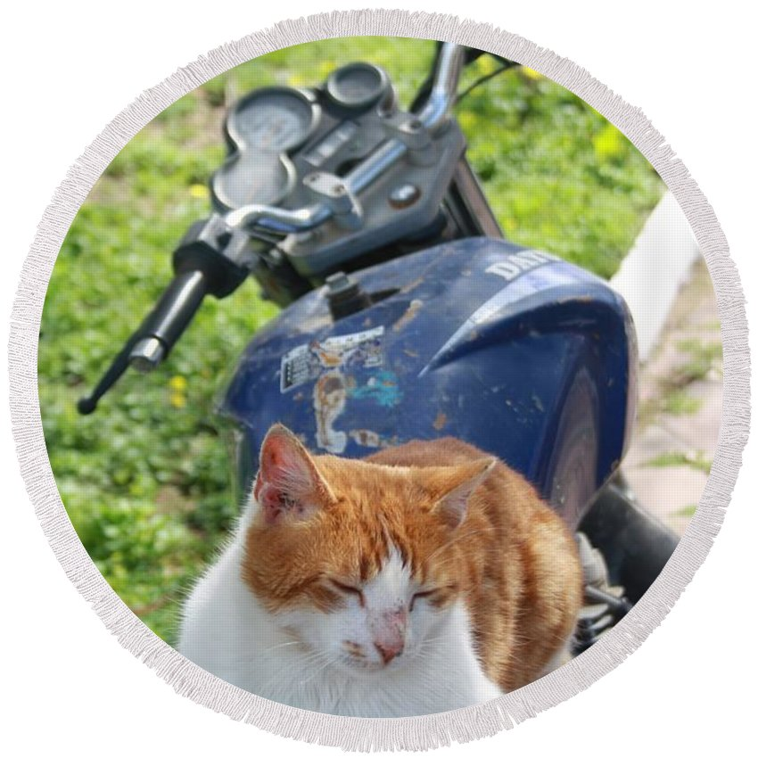 Domestic Cat Round Beach Towel featuring the photograph Ginger And White Tabby Cat Sunbathing On A Motorcycle by Tracey Harrington-Simpson