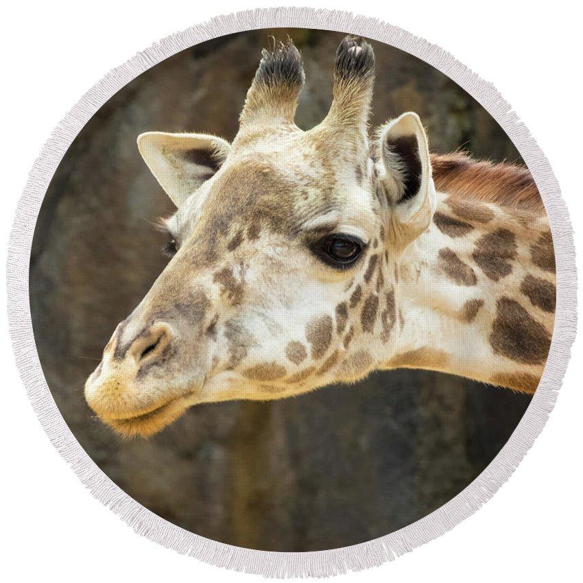 Giraffe Round Beach Towel featuring the photograph Giraffe Up Close by JB Thomas