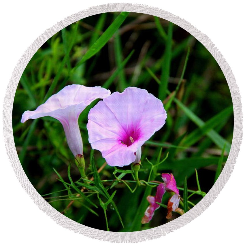 Glades Morning Glory Round Beach Towel featuring the photograph Glades Morning Glory by Barbara Bowen