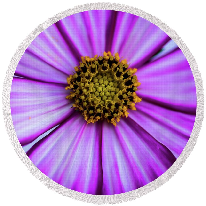 Zinnia Round Beach Towel featuring the photograph Glass Zinnia by Web Browning