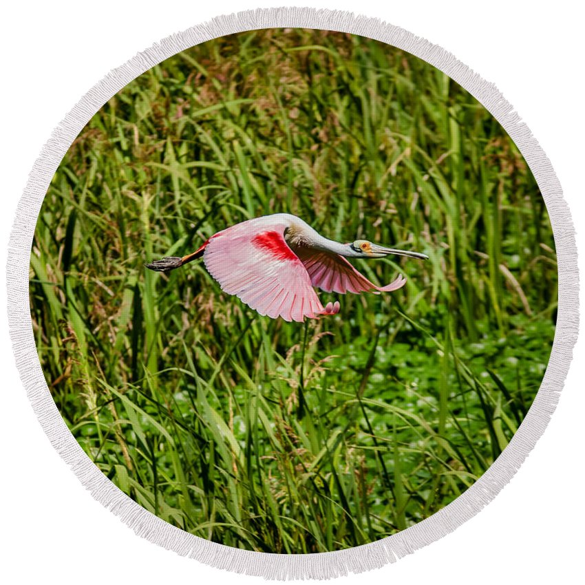 Animal Round Beach Towel featuring the photograph Gliding Spoonbill In Bayou by Robert Frederick