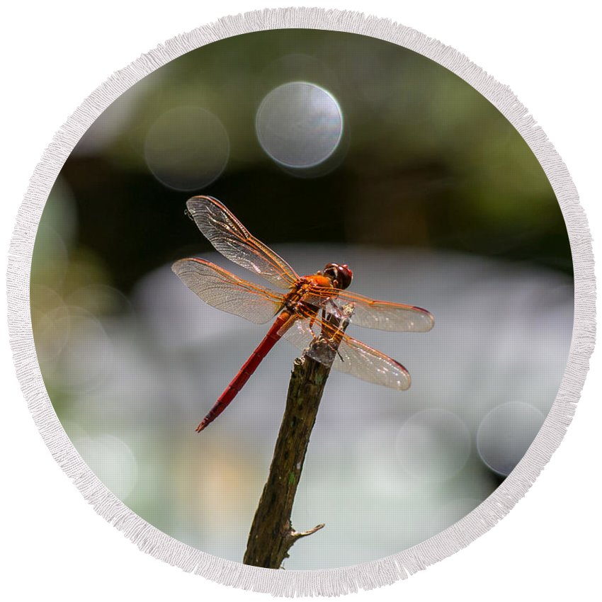 Red Dragonfly Round Beach Towel featuring the photograph Glisten Wings 2 by Stephen Whalen