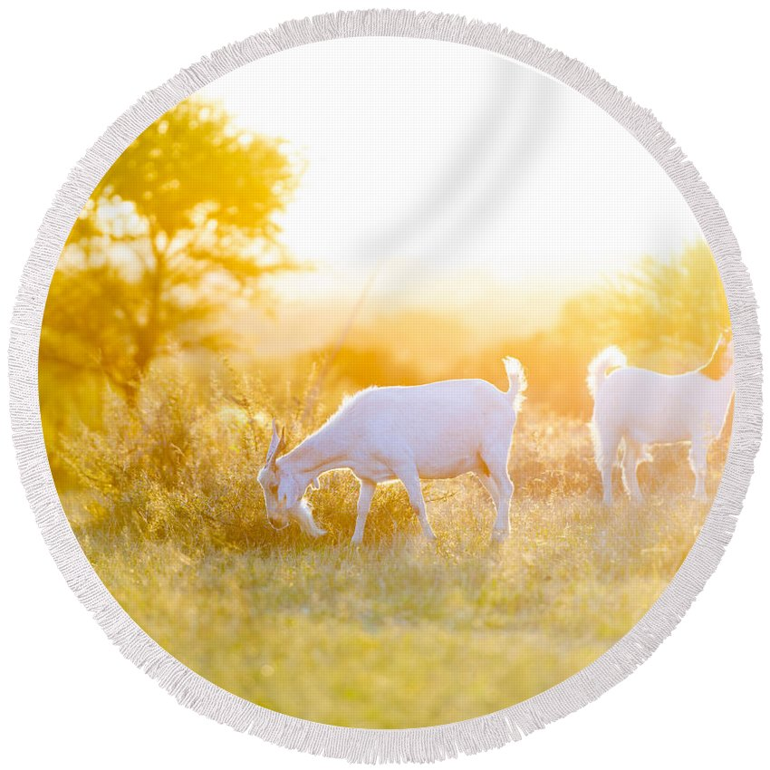 Grazing Round Beach Towel featuring the photograph Goats Grazing In Field by Tim Hester