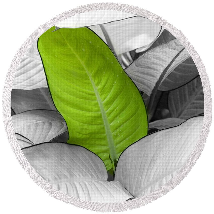 Leaf Round Beach Towel featuring the photograph Going Green Lighter by Marilyn Hunt