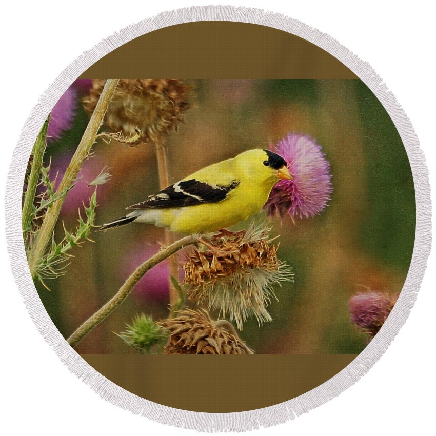 Gold Finch Round Beach Towel featuring the photograph Goldfinch On Thistle by Sandy Keeton