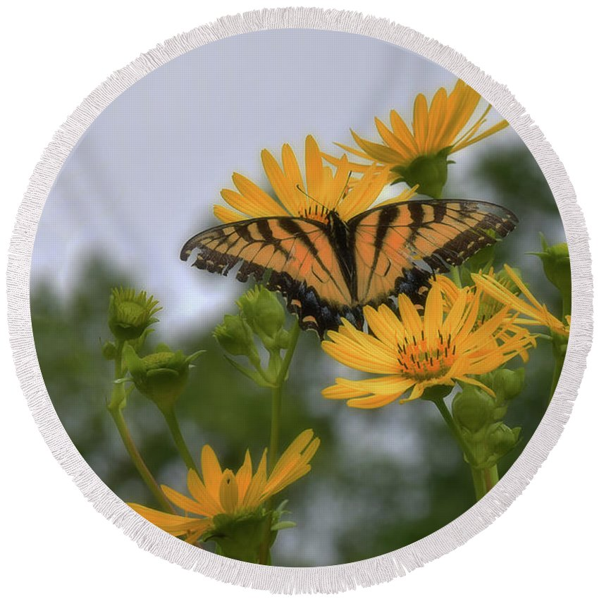 Butterfly Round Beach Towel featuring the photograph Golden Boy by Reese Lewis