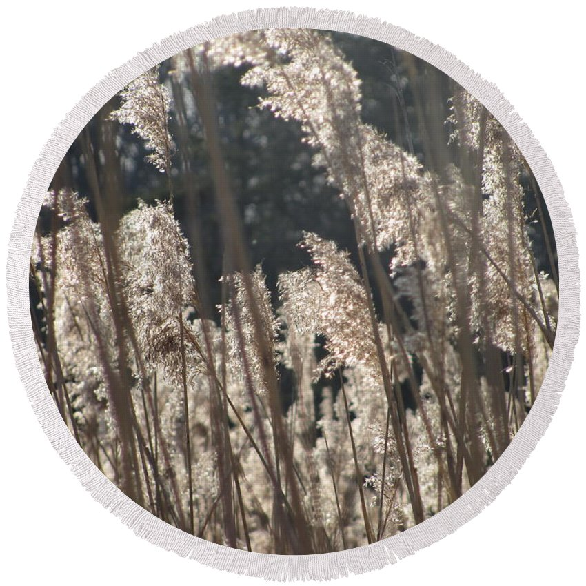 Golden Brown Grass Photographs Canvas Prints Reeds Nuetral Colors Landscape Winter Wetland Images Winter Marsh Photo Prints Maryland Cheasapeake Tributary Round Beach Towel featuring the photograph Golden Brown by Joshua Bales