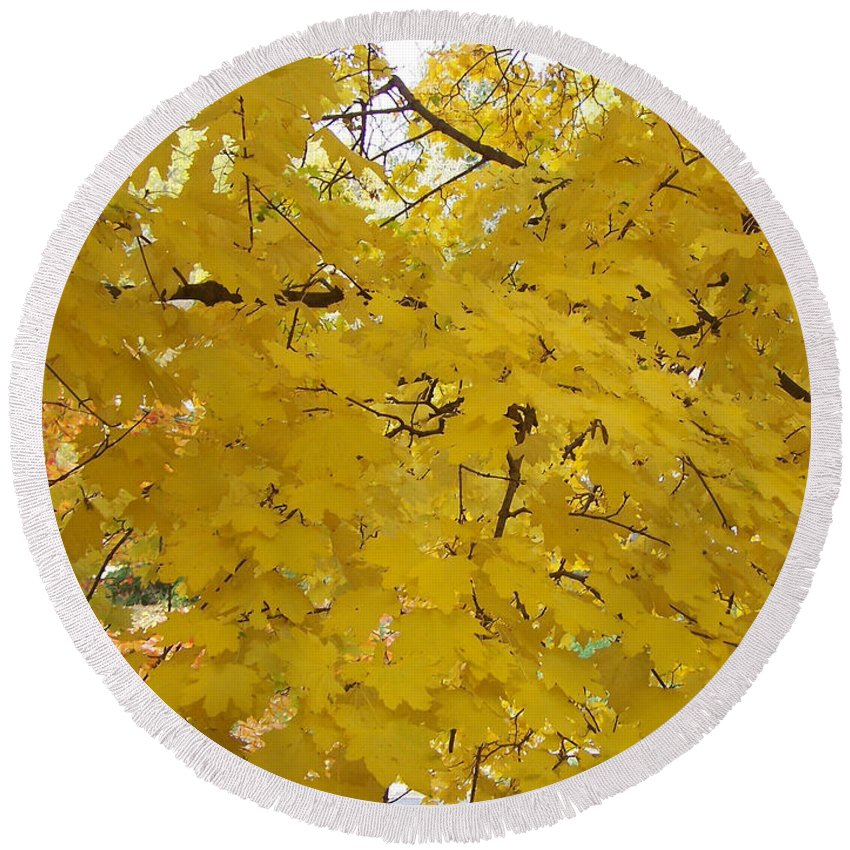 Fall Autum Trees Maple Yellow Round Beach Towel featuring the photograph Golden Canopy by Karin Dawn Kelshall- Best