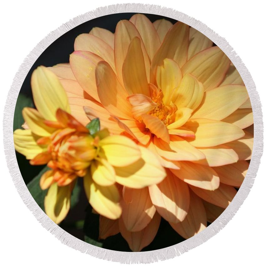 Floral Round Beach Towel featuring the photograph Golden Dahlia With Bud by Jean Clarke