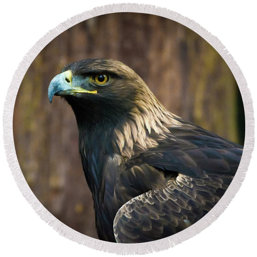Eagle Round Beach Towel featuring the photograph Golden Eagle 5 by Jason Brooks