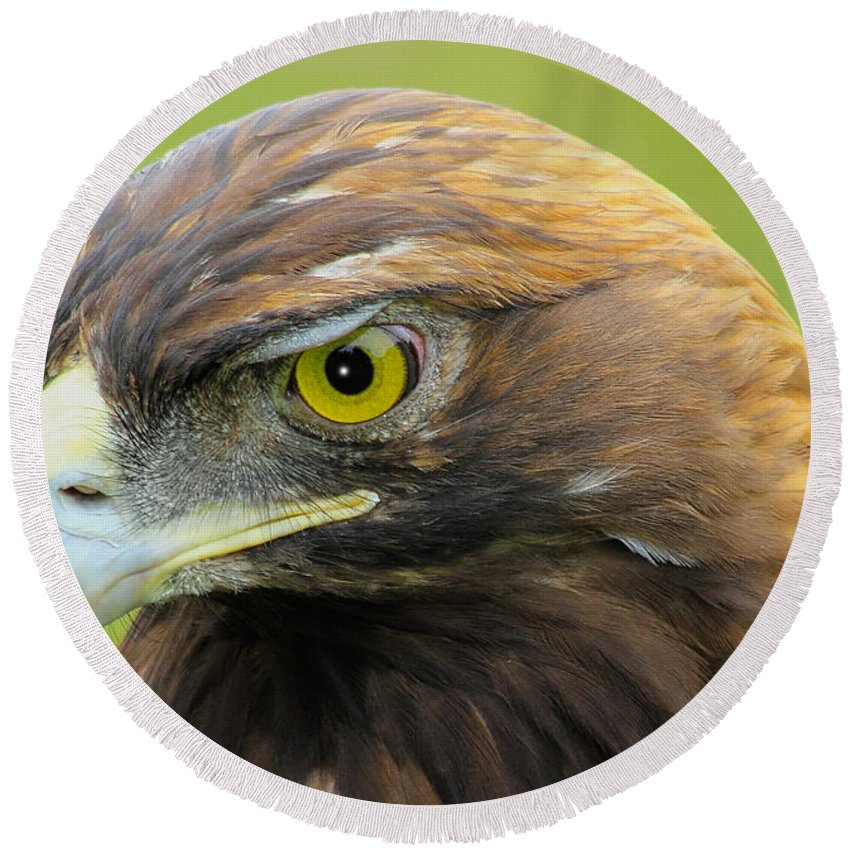 Golden Eagle Round Beach Towel featuring the photograph Golden Eagle by Shane Bechler