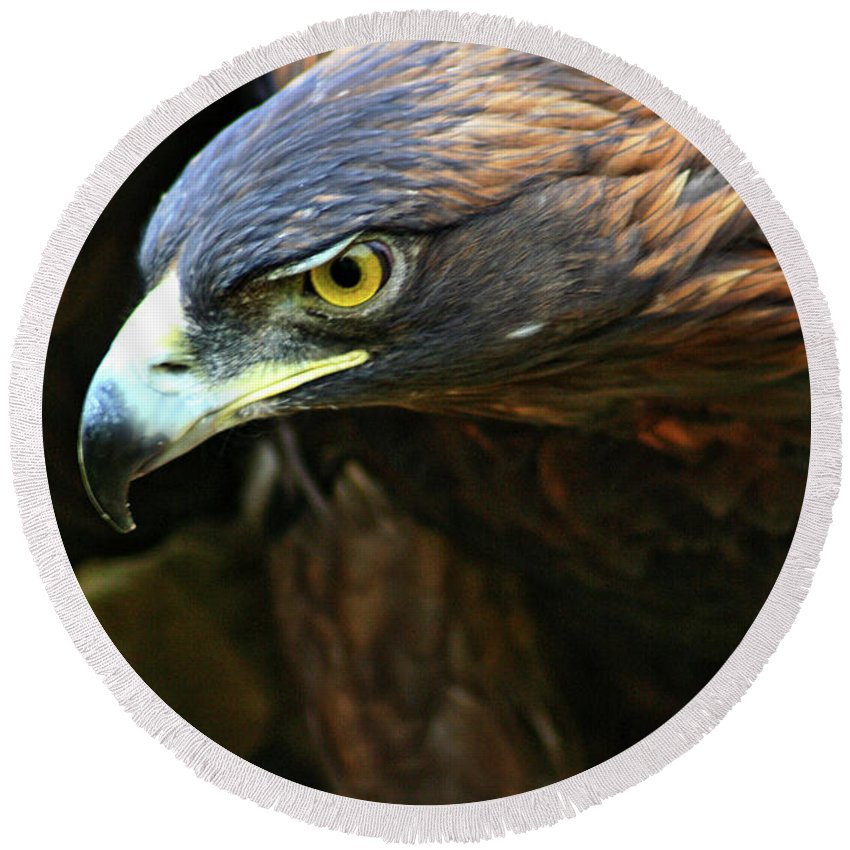 Golden Eagle Round Beach Towel featuring the photograph Golden Eye by Scott Mahon