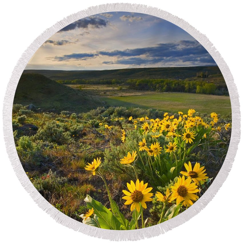 Balsamroot Round Beach Towel featuring the photograph Golden Hills by Mike Dawson