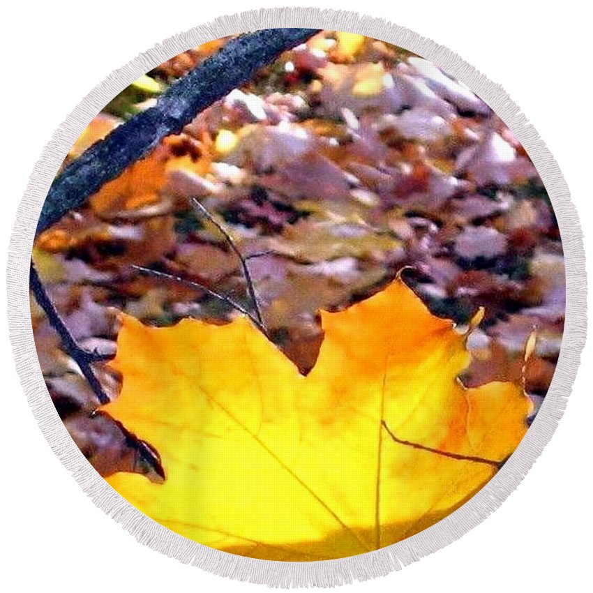 Maple Leaf Round Beach Towel featuring the photograph Golden Leaf by Will Borden