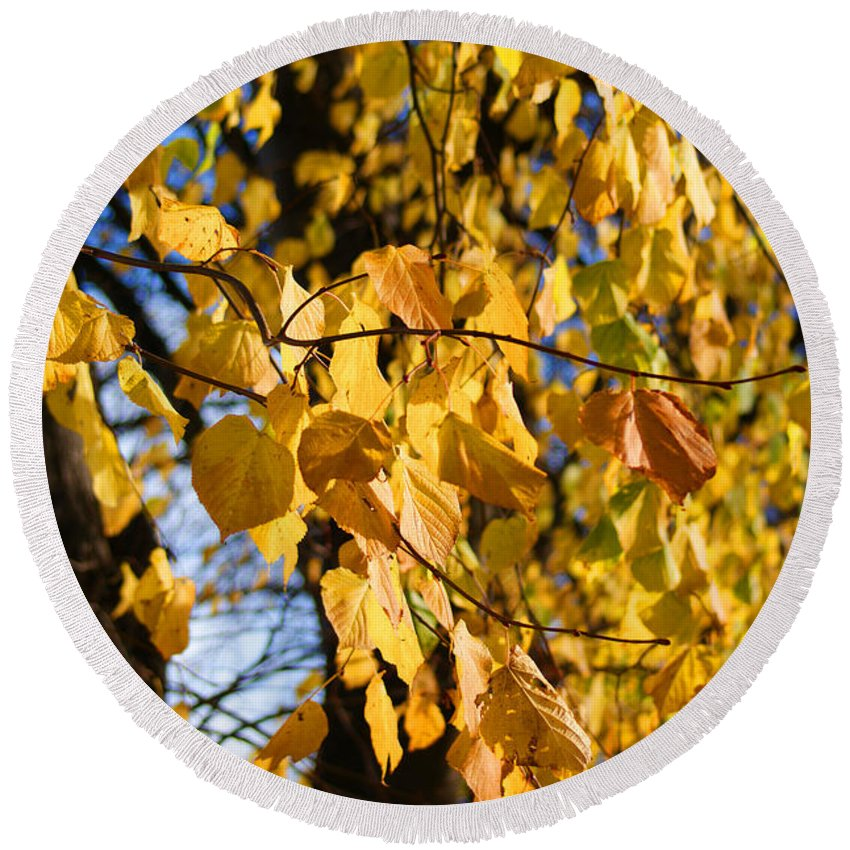 Autumn Round Beach Towel featuring the photograph Golden Leaves by Carol Lynch