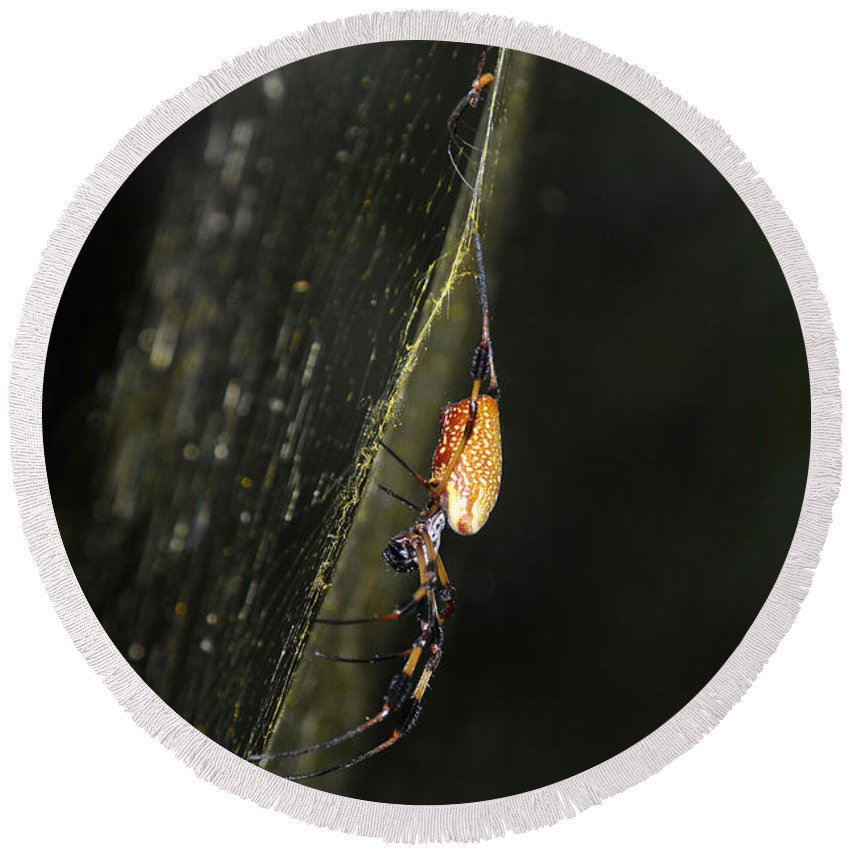 Golden Orb Spider Round Beach Towel featuring the photograph Golden Orb Spider by David Lee Thompson