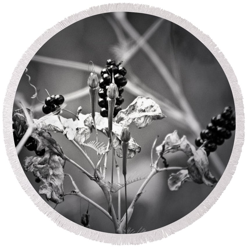 Flower Round Beach Towel featuring the photograph Gone To Seed Berries And Vines by Teresa Mucha