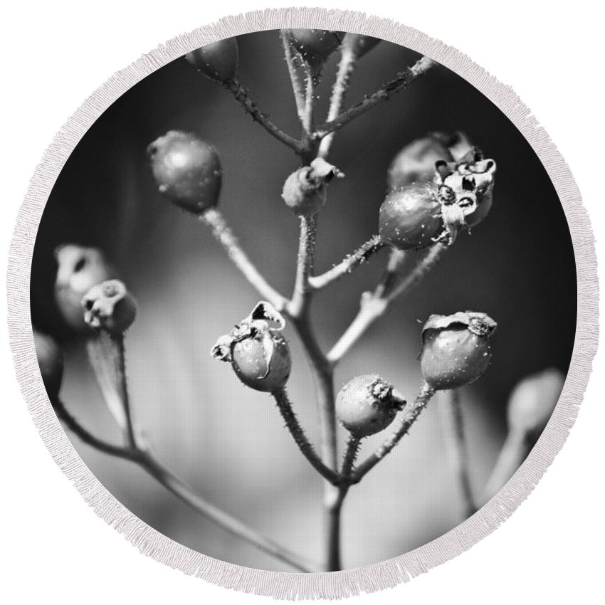 Fall Round Beach Towel featuring the photograph Gone To Seed Rose Hips by Teresa Mucha