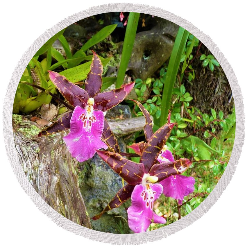 Orchids Hawaiian Rain Forest Round Beach Towel featuring the photograph Good Vibrations by Cat Pancake