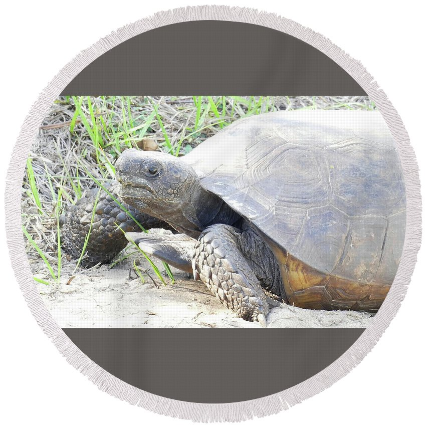 Gopherus Polyphemus Round Beach Towel featuring the photograph Gopher Tortoise by Sally Sperry