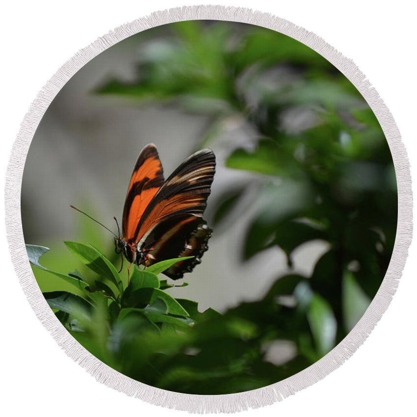 Butterfly Round Beach Towel featuring the photograph Gorgeous View Of An Oak Tiger Butterfly In The Spring by DejaVu Designs