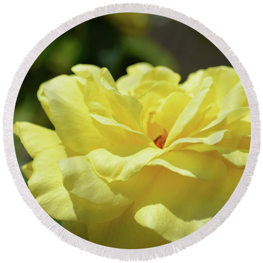 Gorgeous Yellow Rose Round Beach Towel featuring the photograph Gorgeous Yellow Rose by Ruth Housley