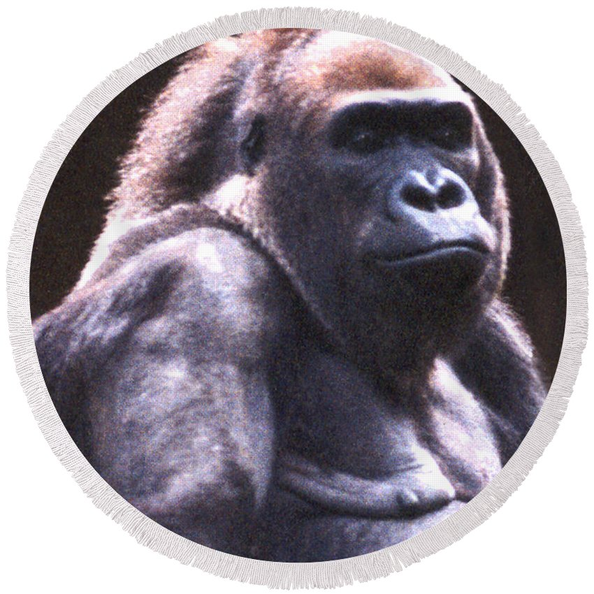 Gorilla Round Beach Towel featuring the photograph Gorilla by Steve Karol