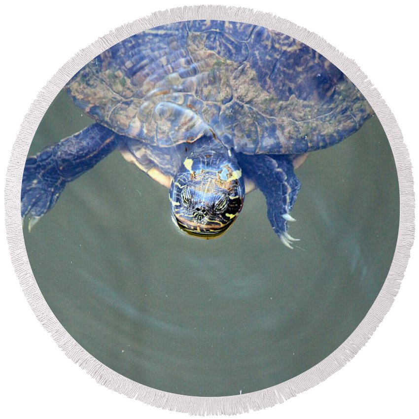 Turtle Round Beach Towel featuring the photograph Got Any Food? by Lorraine Baum