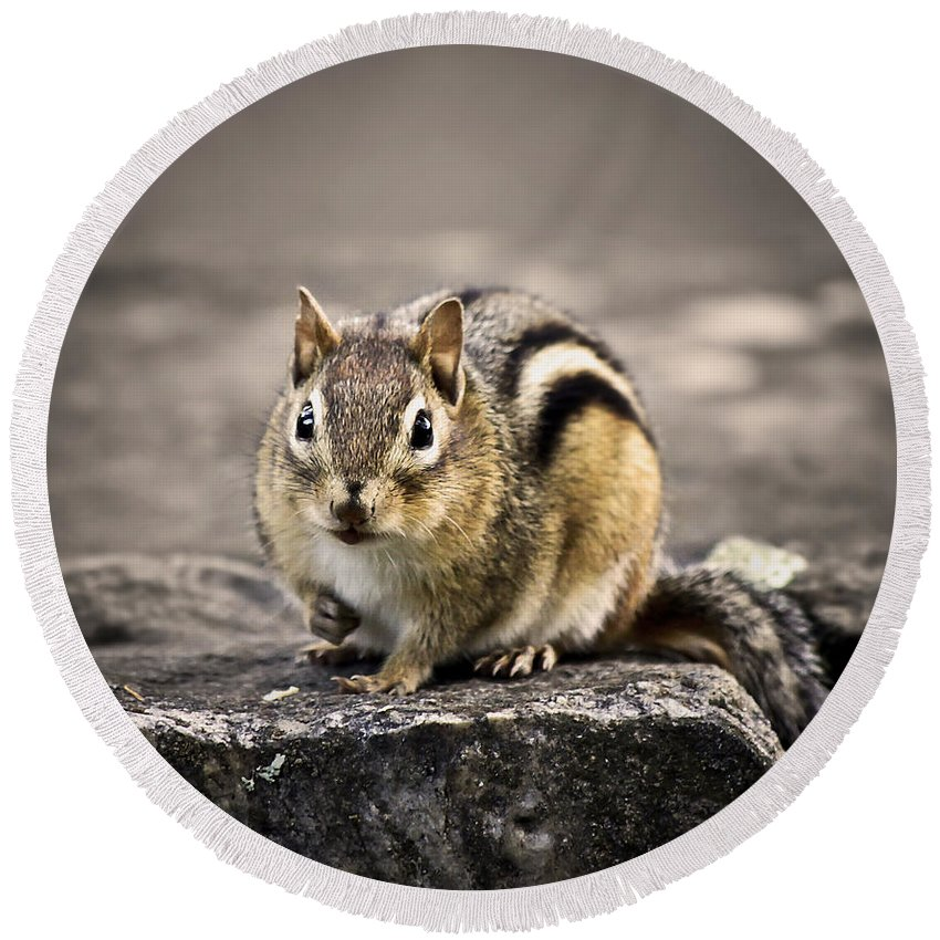Animal Round Beach Towel featuring the photograph Got Nuts by Evelina Kremsdorf
