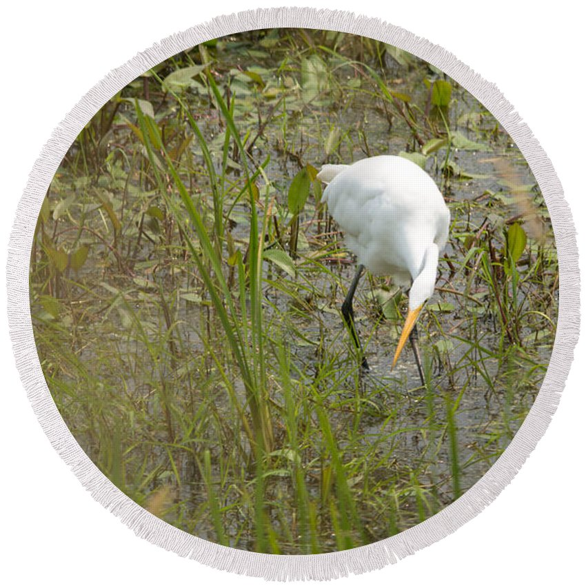 Great Egret Round Beach Towel featuring the photograph Grabbing Lunch by Linda Kerkau