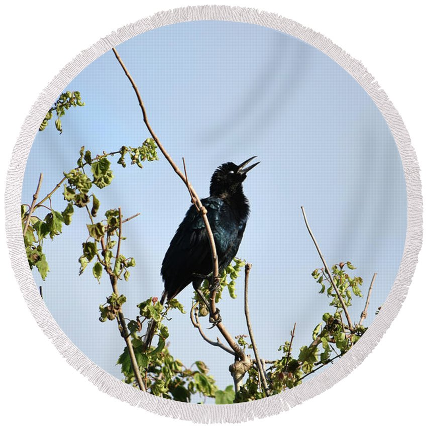 Grackle Cackle Round Beach Towel featuring the photograph Grackle Cackle by William Tasker