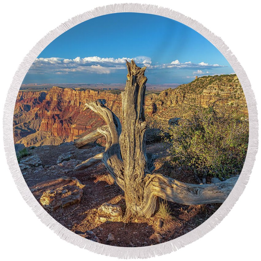 Grand Canyon Round Beach Towel featuring the photograph Grand Canyon Old Tree by Steven Sparks