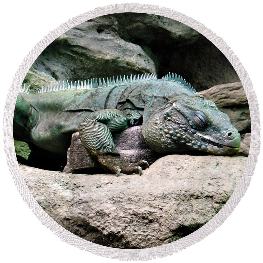 Lizard Round Beach Towel featuring the photograph Grand Cayman Blue Iguana by Angelina Tamez