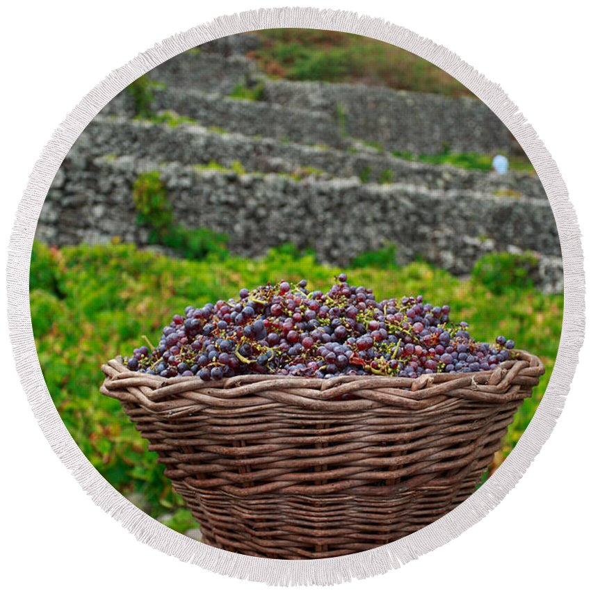 Basket Round Beach Towel featuring the photograph Grape Harvest by Gaspar Avila