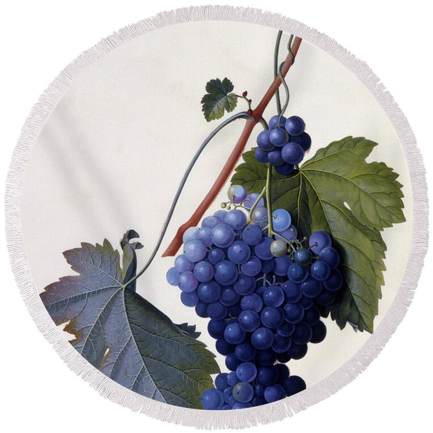 Grape Round Beach Towel featuring the painting Grapes by Georg Dionysius Ehret