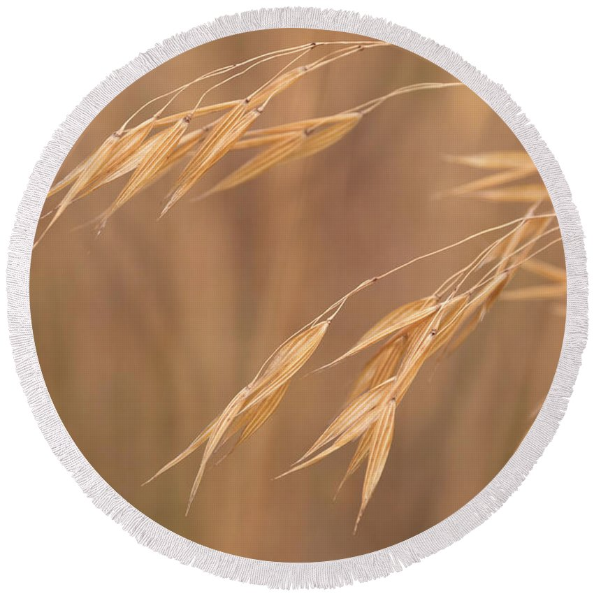 Stipa Round Beach Towel featuring the photograph Grass In The Wind by Monika Tymanowska