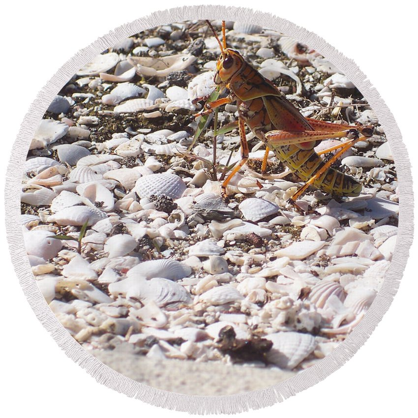 Florida Round Beach Towel featuring the photograph Grasshopper by Chris Andruskiewicz