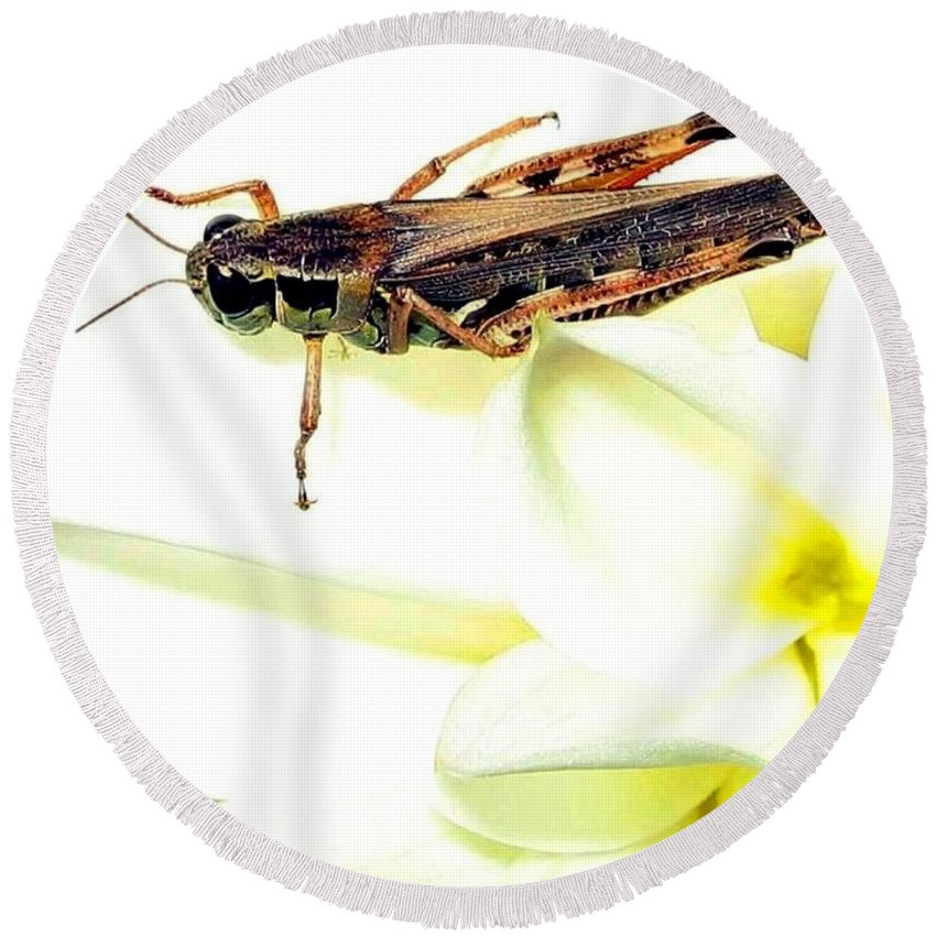 Grasshopper Round Beach Towel featuring the photograph Grasshopper by Will Borden
