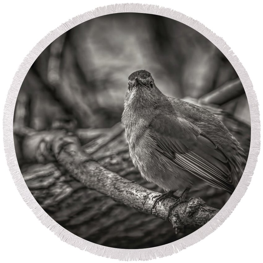 Ornithology Round Beach Towel featuring the photograph Gray Catbird by LeeAnn McLaneGoetz McLaneGoetzStudioLLCcom