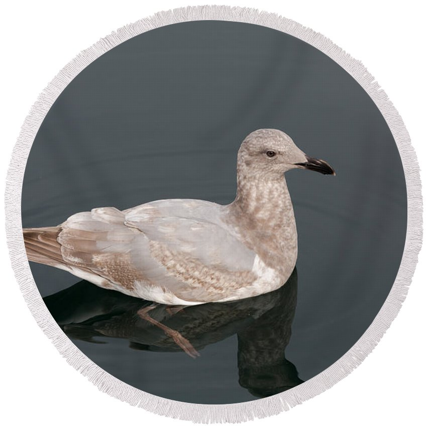 Seagull Round Beach Towel featuring the photograph Gray Gull Reflection by John Daly