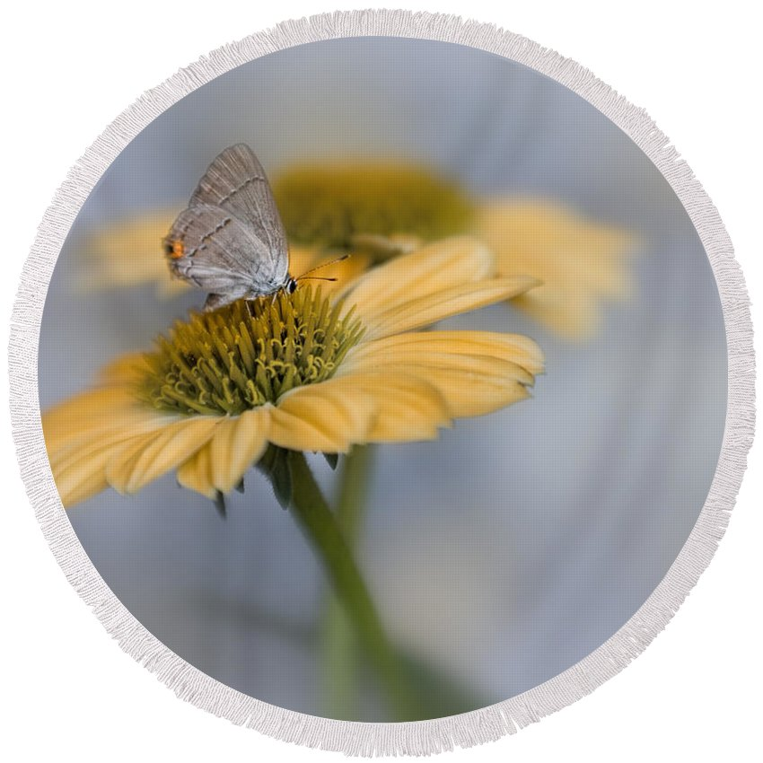 Bloom Round Beach Towel featuring the photograph Gray Hairstreak II by David and Carol Kelly