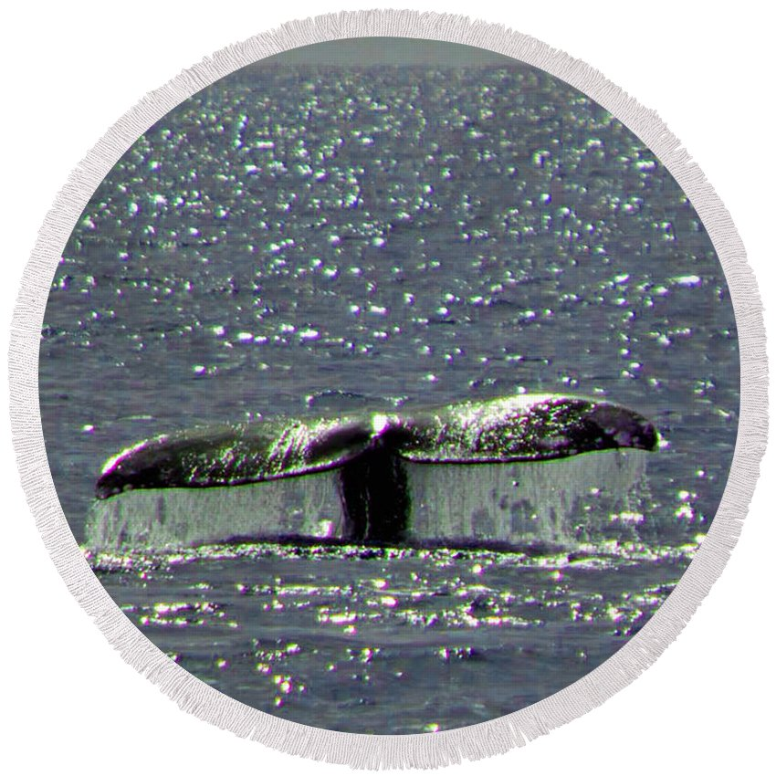 Grey Whale Round Beach Towel featuring the photograph Gray Whale by Marta Robin Gaughen