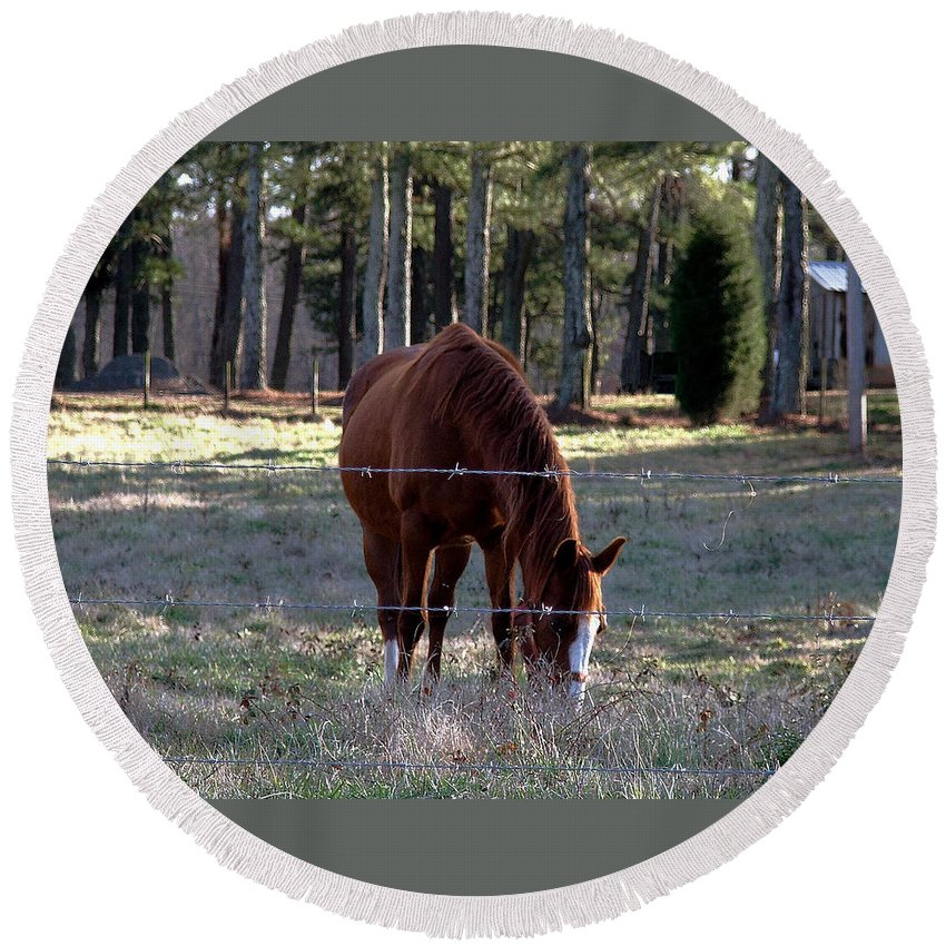 Horse Round Beach Towel featuring the photograph Grazing by Robert Meanor