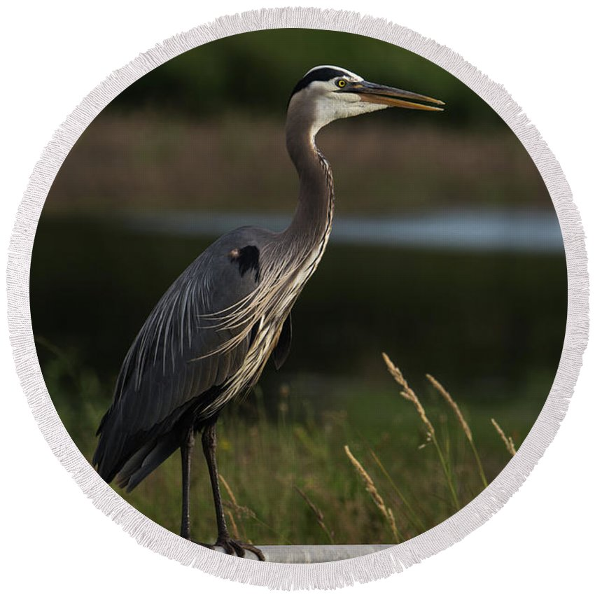 Bird Round Beach Towel featuring the photograph Great Blue Heron 1 by John Wood