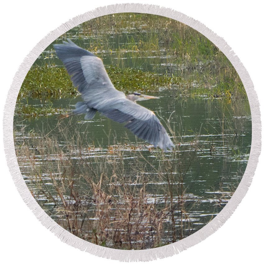 Bird Round Beach Towel featuring the photograph Great Blue Heron 2 by John Wood