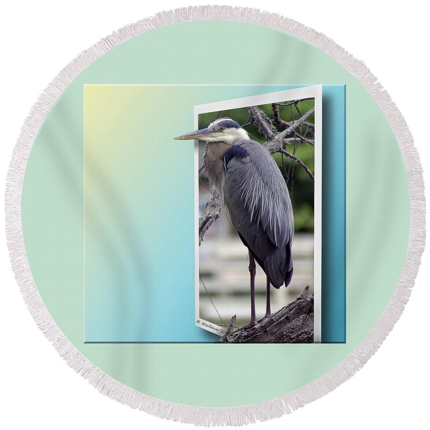2d Round Beach Towel featuring the photograph Great Blue Heron by Brian Wallace