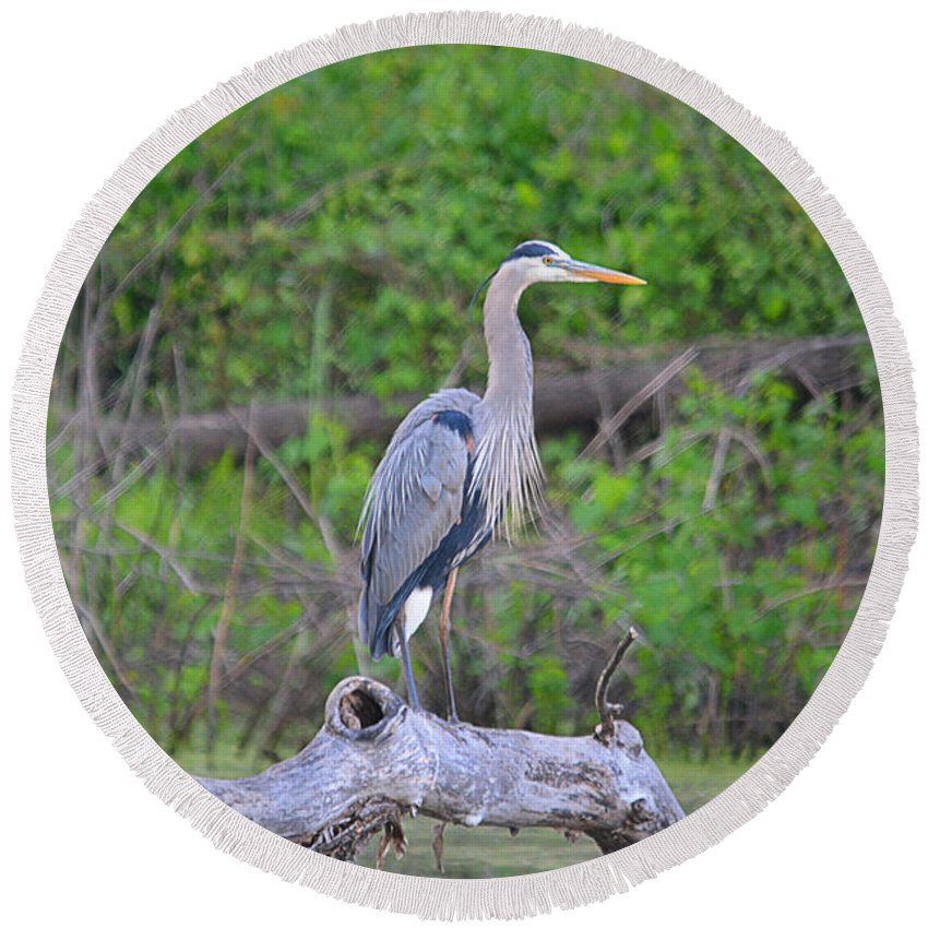 Great Blue Heron Round Beach Towel featuring the photograph Great Blue Heron by Deanna Cagle